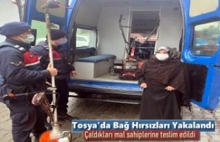 Tosya'da Bağ Hırsızlarının Çaldıkları...