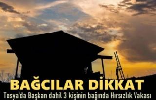 TOSYA'DA BAĞ HIRSIZLIK VAKALARINA DİKKAT