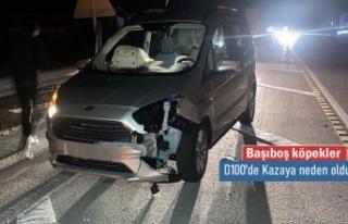 Tosya D100 Karayolunda Başıboş Köpek Kazaya neden...