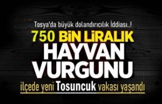 Tosya'da Büyük Hayvan Dolandırıcılık İddiası..!