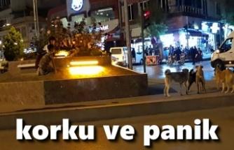 Tosya'da Sokak Köpekleri Çözüm Bekliyor