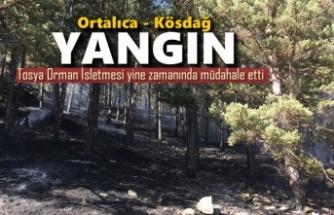 Tosya Kösdağ'da Orman Yangını
