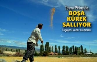 TOSYA PİRİNCİ BOŞA KÜREK SALLIYOR
