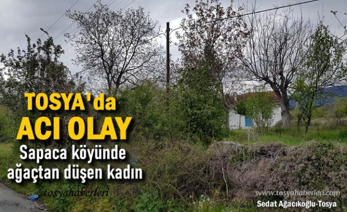 TOSYA'DA  YAŞLI KADIN AYVA AĞACINDAN DÜŞTÜ